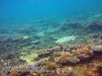 809 GE-start-of-good-coral_IMG_1428.jpg