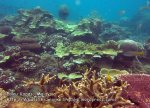 827 GJ-Good-coral-at-GJ_IMG_1532.jpg