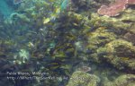 844 GK-Coral_IMG_1513.jpg