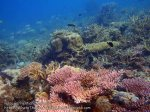 Malay_Perhentian_0168_1c_Diverse-Corals_P8071992.JPG