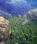 Malay_Perhentian_0437_10a_Diverse-Corals_P8051724.JPG