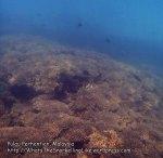 Malay_Perhentian_0540_12c_Corals-Near-Platform_P8031073.JPG
