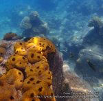 Malay_Perhentian_0764_17a_Sponges-and-deep_P8041340.JPG