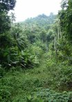 Malay_Perhentian_0830_Track_X-Island-Track-Startpoint_P8051501.JPG