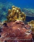 Malay_Perhentian_0844_18bc_Corals_P8041431.JPG