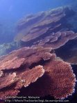 Malay_Perhentian_0856_18cd_Corals_P8041444.JPG