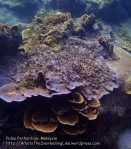 Malay_Perhentian_0874_18d_Corals_P8041473.JPG