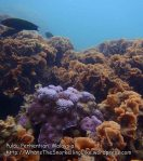 Malay_Perhentian_1091_23a_Corals_P8020849.JPG