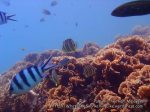 Malay_Perhentian_1105_23b_Fishy-Reef_P8092328.JPG