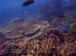 Malay_Perhentian_1107_23b_Fishy-Reef_P8092320.JPG