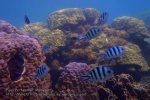 Malay_Perhentian_1108_23b_Fishy-Reef_P8092323.JPG