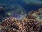 Malay_Perhentian_1129_23c_Corals_P8092354.JPG
