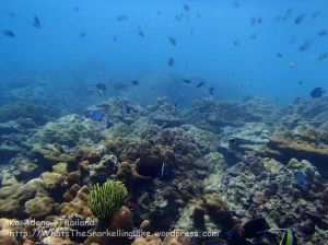 Thai_Adang_061_bc-Main-reef_P1122266_.JPG