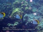 Thai_Adang_068_bc-Lined-Butterflyfish_P1132389_.JPG