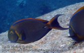 Thai_SimilansTEMP_129_P4210613.JPG