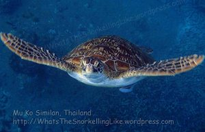 Thai_SimilansTEMP_136_P4210548.JPG