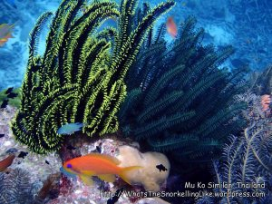 Thai_SimilansTEMP_221_Island-4_P4292210_.jpg