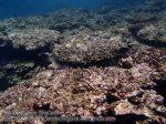 105_1a-rhs-corals_P4154163_.JPG
