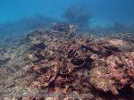 106_1a-rhs-corals_P4154162_.JPG