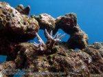 142_1e-coral_P4062091_.jpg