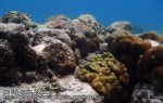 148_1f-coral_P4041669_.JPG