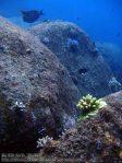 174_2b-Coral-on-Rocks_P4062166_.JPG