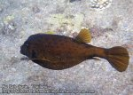 178_2c-Yellow-Boxfish_P4062177_.jpg