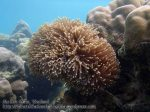 244_3e-Anemone-Nemo_P4051900_.jpg