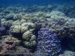 293_4c-Coral_P4082541_.JPG