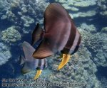 360_4g-Batfish-Returns_P4092808_.jpg