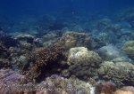 372_5a-Reeftop-corals_P4082578.JPG