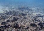 390_5d-Staghorn-Corals_P4082650_.JPG