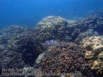 412_5l-Corals_P4092861_.jpg