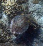 504_8b-Turtle_P4123705_.JPG