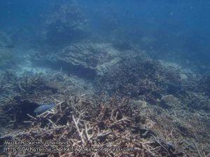 509_8e-Coral_P4123691.JPG