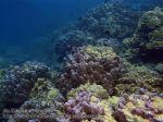 569_9d-Coral_P4113443_.JPG