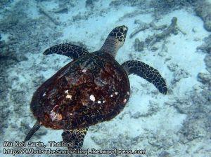 664_11bc-Turtle_P4103316_.jpg
