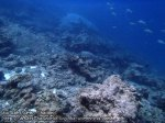 679_11h-Rock-and-Coral_P4113437.JPG