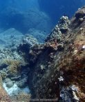 680_11h-Rock-and-Coral_P4113435.JPG