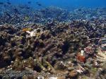 688_11k-Algae-Choked-Coral_P4113409.JPG