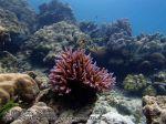 889_28-Corals_P4062049_.JPG