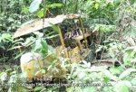 zThai_Tarutao_Temp_hg_The-Little-Bulldozer-who-couldnt-P2150565.jpg