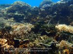 Malay_Perhentian-Env_220_Area-B_Corals_P8102507.JPG