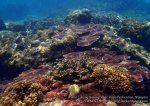 Malay_Perhentian-Env_222_Area-B_Corals_P8102540.JPG