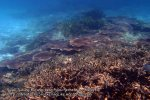 Malay_Perhentian-Env_226_Area-B_Corals_P8102538.JPG