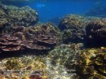 Malay_Perhentian-Env_307_Area-C_Corals_P8102559.JPG