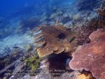 Malay_Perhentian-Env_316_Area-C_Corals_P8102573.JPG