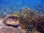 Malay_Perhentian-Env_317_Area-C_Corals_P8102574.JPG
