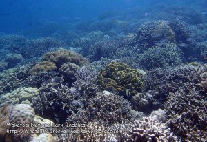 078_Wanci-02a_Hard-and-Soft-Coral_P8090042_P1018563_.jpg