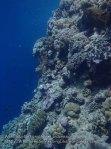 081_Wanci-02a_Deeper-Coral_P8090048_P1018569.jpg
